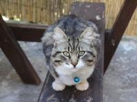 Fethiye'nin En Güzel Kedisi Seçildi!
