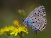 2015 Güncel Kamp Alanları – 4  Kelebekler Vadisi /Fethiye -Faralya